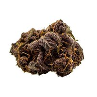 Buckeye Purple | Untrimmed