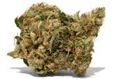 Sour Headband by Cloud Cover